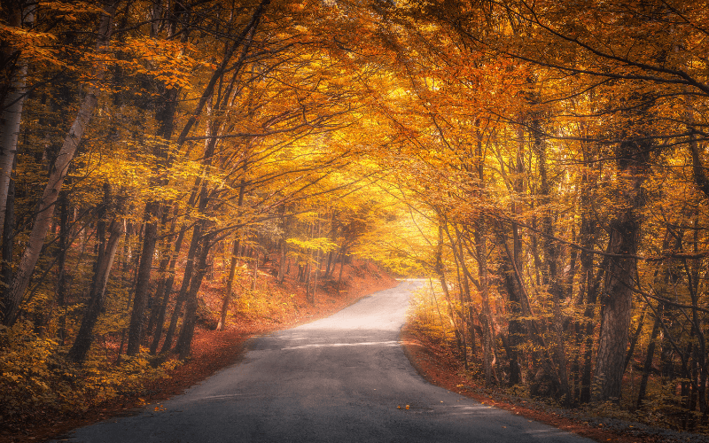 Vertu Toyota's Guide To Autumn Driving